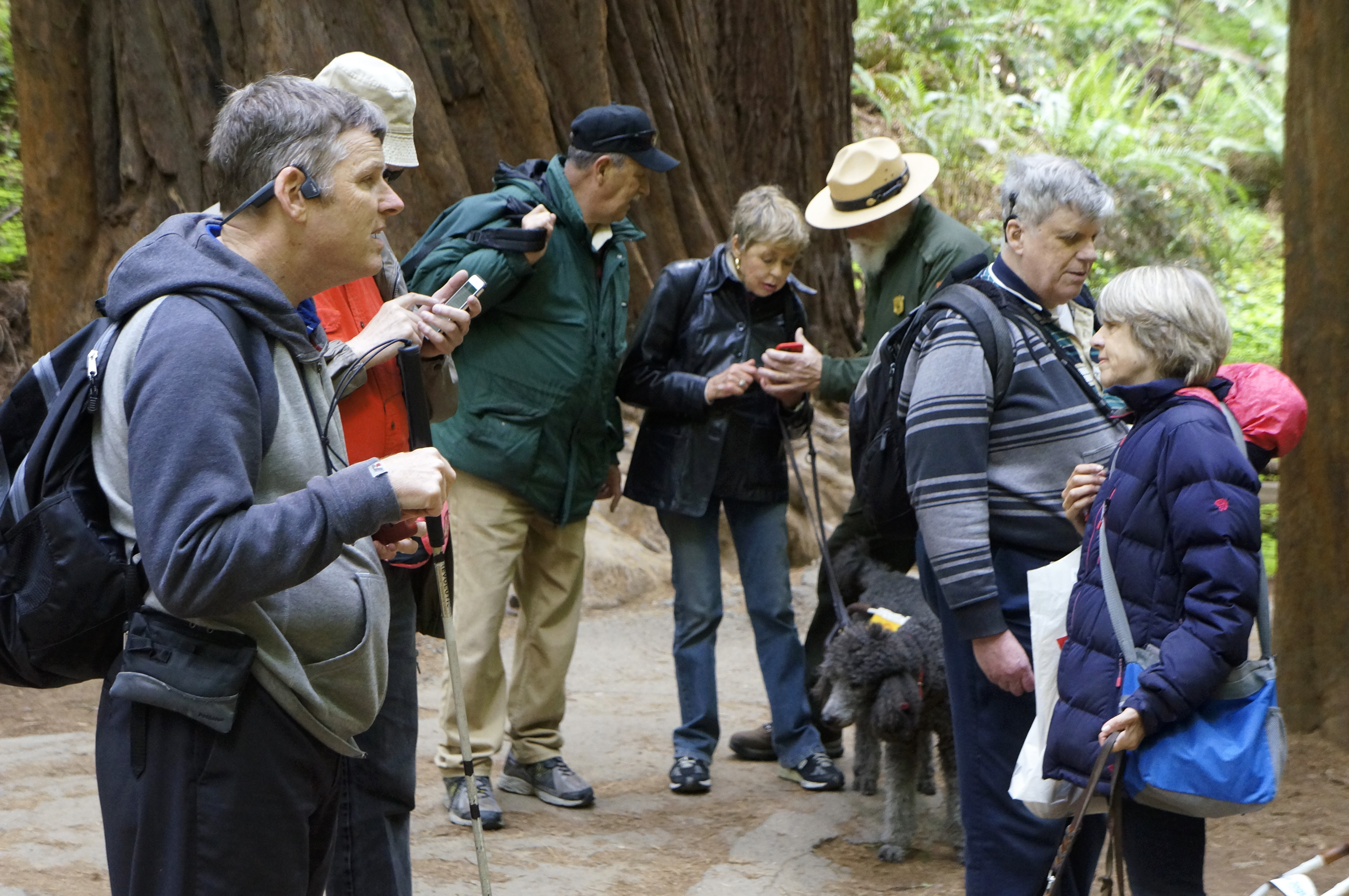 Photo of Testing Audio Description: Muir Woods National Monument, California (2018)