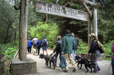 Photo of Testing Audio Description: Muir Woods National Monument, California (2018)