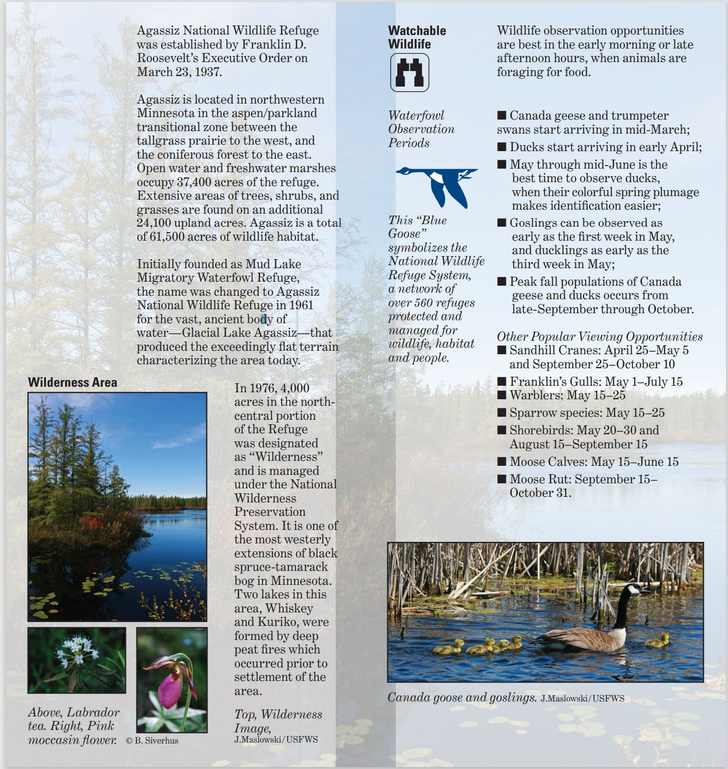 IMAGES and TEXT: Wilderness Area section image